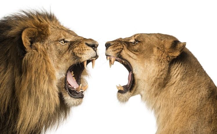 boze leeuwen